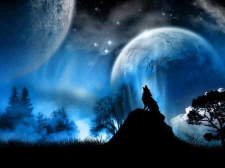 狼, オオカミ 写真