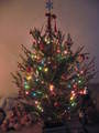 Xmas tree - christmas photo