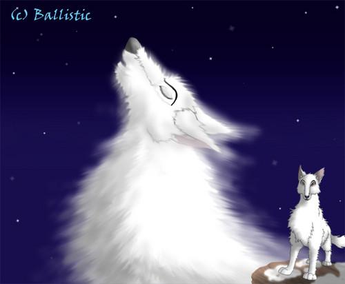 aniu howling