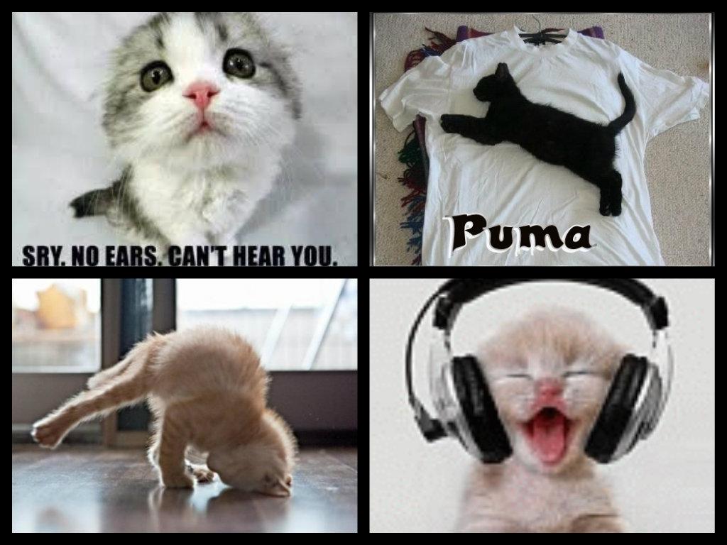 Funny Animals ha ha ha lol
