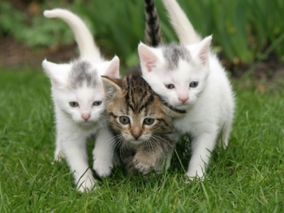 3 kittens cats photo 33268590 fanpop The three cats