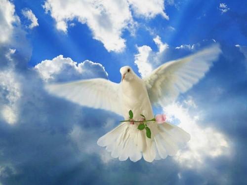 cynthia-selahblue (cynti19) Hintergrund called Bird