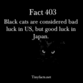 Black kucing
