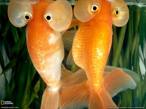 Bubble buddies! :D