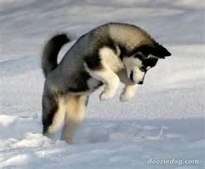 Doggies<3