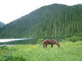 Kolsay summer - horses photo