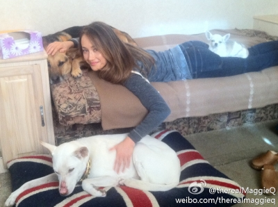 Maggie Q wallpaper possibly with a bullterrier called Maggie Q