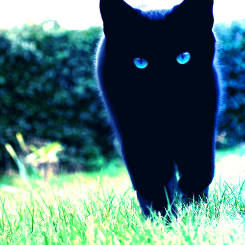 Mariam as a cat