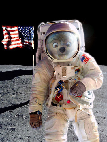 One small step for wolves. One giant leap for cainines