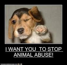 STOP ANIMAL ABUSE!!! wallpaper entitled Stop