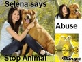 Stop - stop-animal-abuse photo