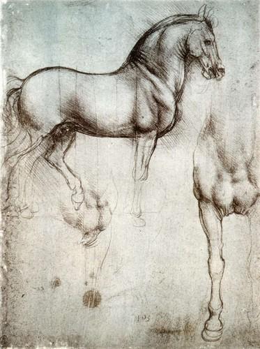 Study of horse from Leonardo's journals
