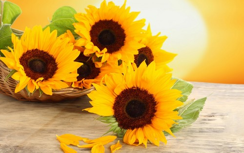 Flowers wallpaper with a sunflower, a common sunflower, and a bouquet titled Sunflowers