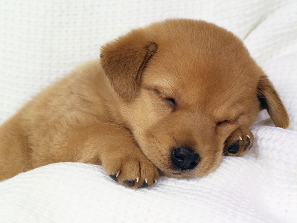 cute puppy dogs photo 33237869 fanpop
