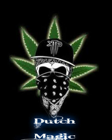 Marijuana wallpaper called dutch weed