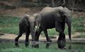 elephant - elephants photo