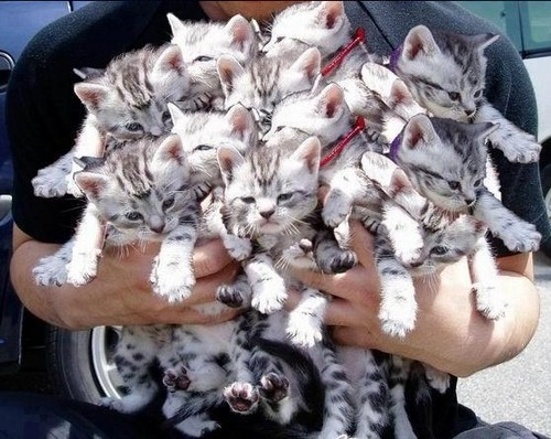 chatons bouquet