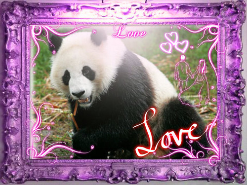 Pandas wallpaper probably containing a giant panda called love me