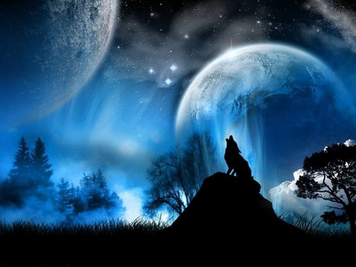♥ wolf in the Moonlight ♥