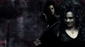 Bellatrix Wallpaper - bellatrix-lestrange photo