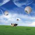 Cow and Eyes - pink-floyd fan art