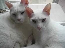 Jupie and Kona