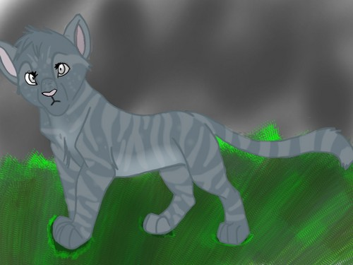 LionClan, LeopardClan, and TigerClan wallpaper probably with a kitten called Lostpaw