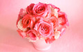 Pink Roses  - flowers wallpaper
