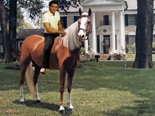 Elvis Presley wallpaper containing a dressage, a horse wrangler, and a horse trail called Rising Sun & Elvis
