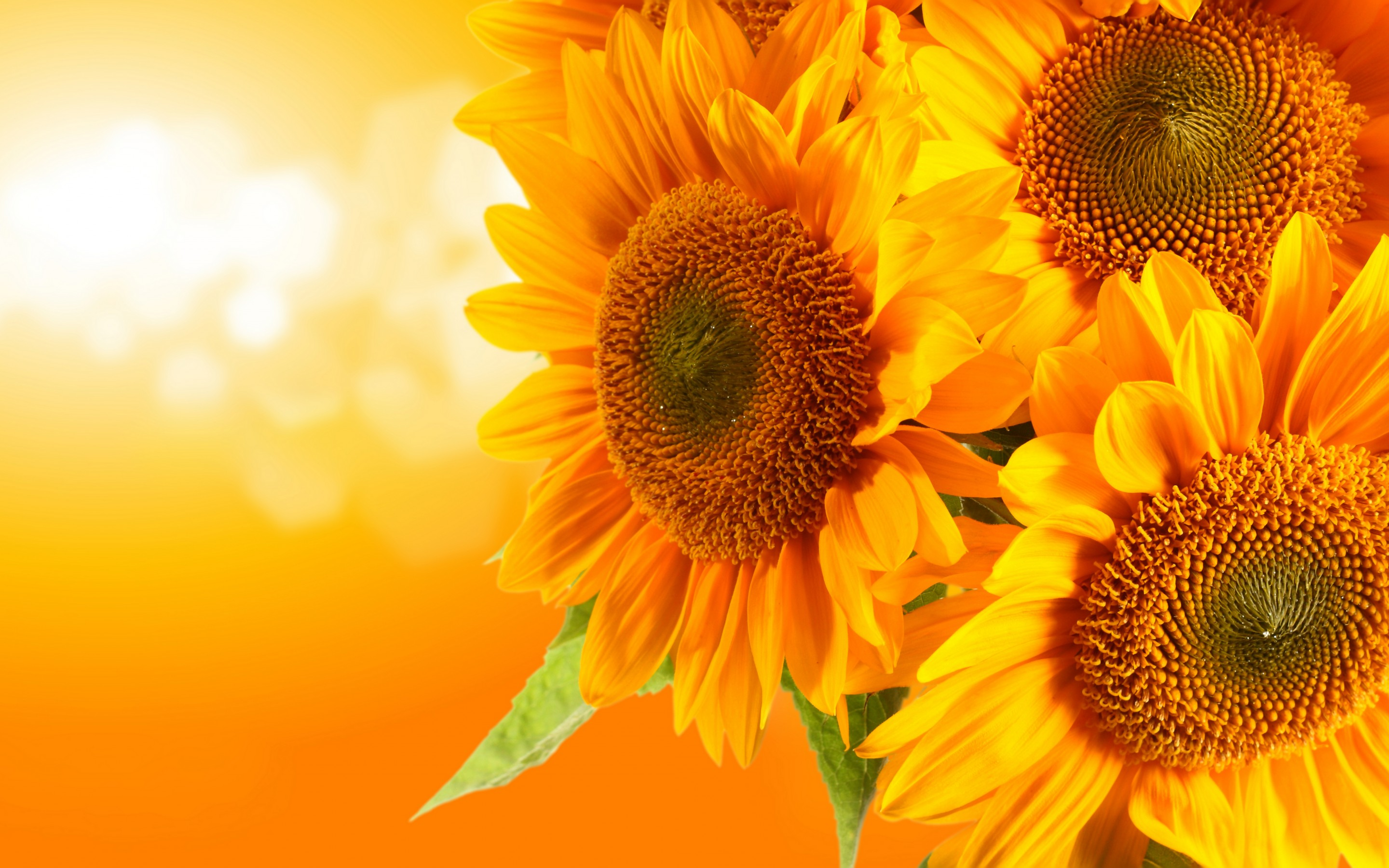 Sunflowers  Flowers Wallpaper 33340979  Fanpop
