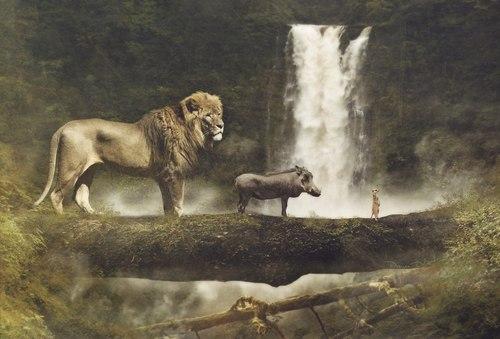the lion king wallpaper titled The Real Hakuna Matata