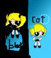 black and cat