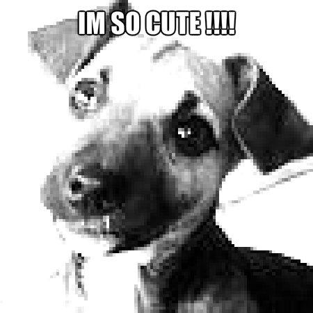 cute cún yêu, con chó con