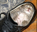 shoe - fanpop-pets photo