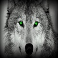 wolf green - wolf-lovers-place photo