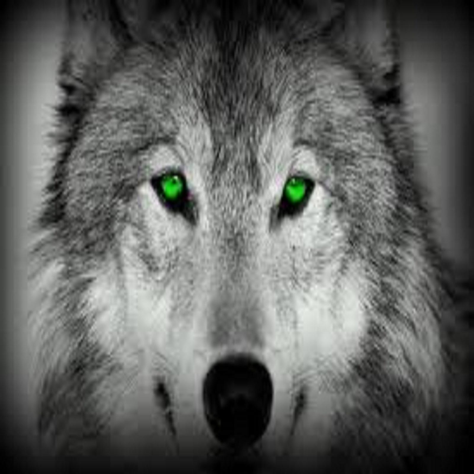 wolf green - Wolf lovers place Photo (33387639) - Fanpop