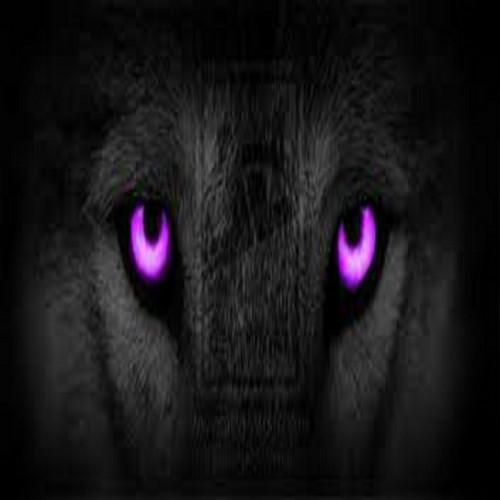 lobo purple