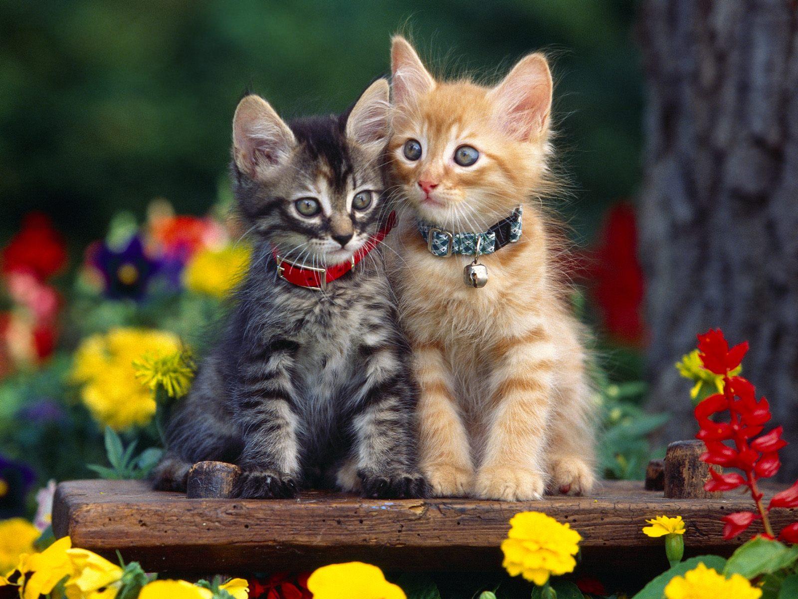 Cute Cats Cats Fanpop