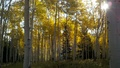 Fall colors on the Wasatch - autumn photo