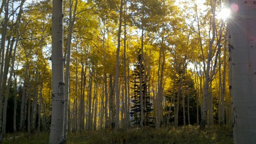 Fall colores on the Wasatch