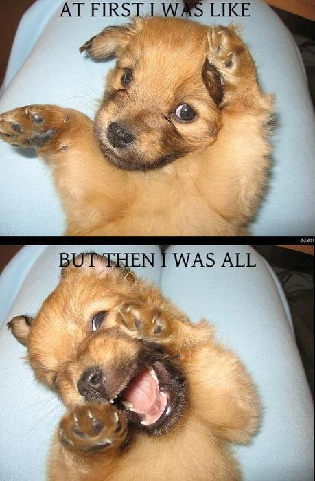 things that are funny images funny wallpaper and background photos
