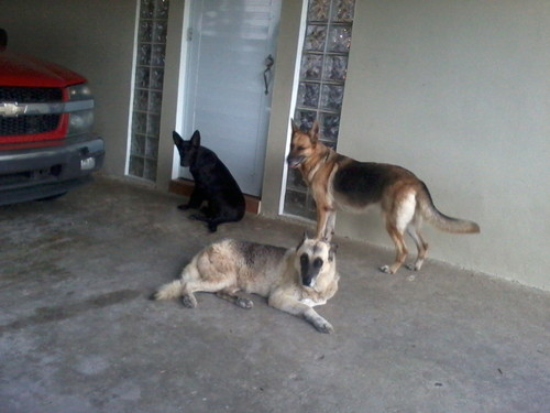 Lebron(puppy) Luna, Estrella