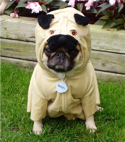 Pug Costume