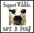 Pug Rescue
