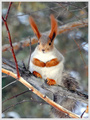 Squirrel - animals photo