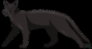 Warrior Katzen