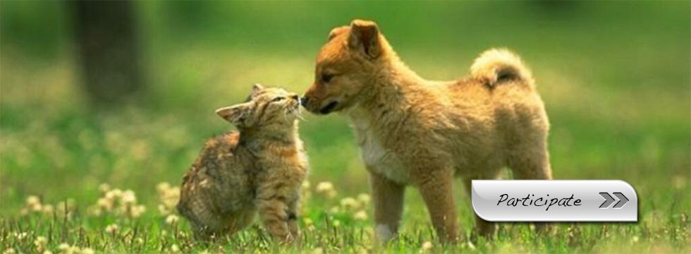 animals - Animal Rights Photo (33409674) - Fanpop