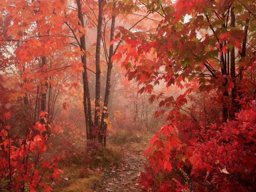 autumn colors - Colors Photo (33432460) - Fanpop