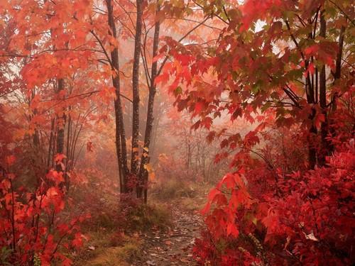 autumn couleurs