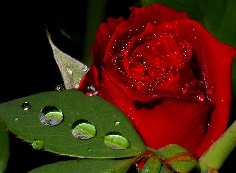 Roses images colorful roses hd wallpaper and background for Colorful roses images